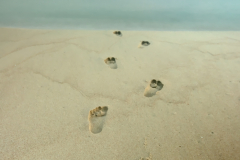 Footprints in the sand towards the sea