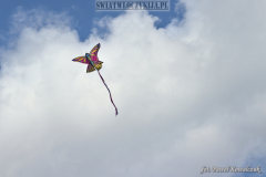Kite floating in the sky in the shape of a colorful butterfly
