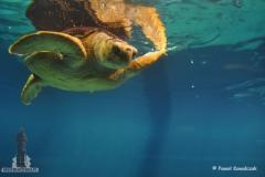 Odbicie żółwia