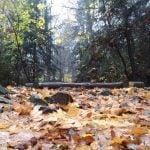 Jesień. Zdjęcie przedstawia liście jesienne na szlaku na Łysą Górę. Zdjęcie wykonane z perspektywy liści