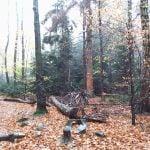 Świetokrzyski Park Narodowy. Las bukowy.