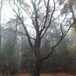 drzewo pośrodku lasu.