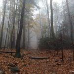 Szlak na Łysa Góre spowity we mgle
