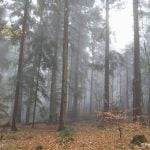 Las spowity mgłą.