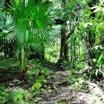 Dżungla na wyspie Oahu. Egzotyczna roślinność wyspy Oahu