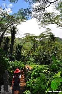 Szlak prowadzący do wodospanu Manoa. Jedna z atrakcji na wyspie Oahu na Hawajach. W tle widoczna bujna egzotynczna roślinność porastającej szlak dżungli.