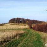 droga przez pola. Szlak na Żabią Górę