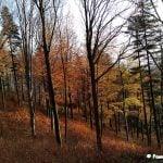 barwy jesieni w zagajniku na szlaku na Górę Żabią