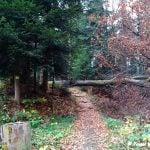 powalone drzewo na szlak. Przeszkoda naturalna.