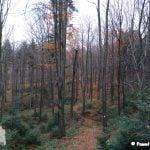lesny szlak w górach beskidu wyspowego