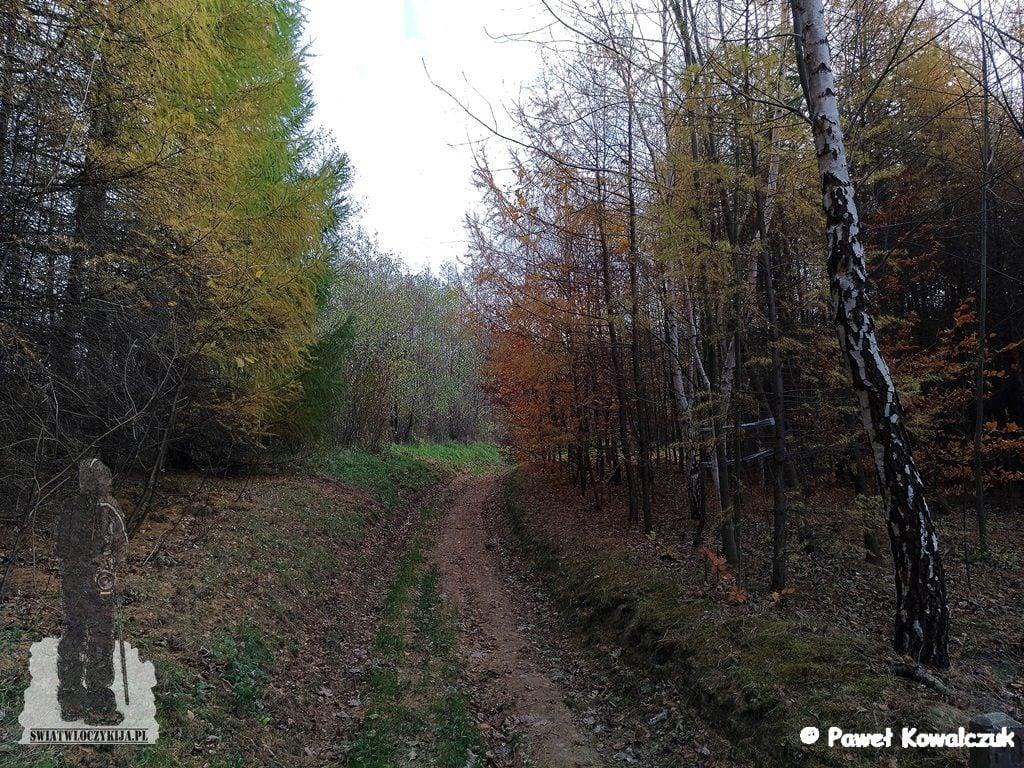 leśna droga. zagajnik brzozowy.