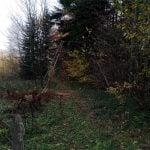 Pozostałości starego wyciągu wzdłuż którego biegnie szlak do Rymanowa Zdrój