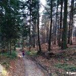 Szlak biegnący przez stary las.