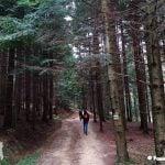 Droga przez jodłowy las