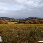Pagórki i lasy z perspektywy łąki