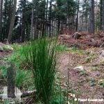 Sztywna wysoka zielona trawa na szlaku na górę Mogiła.