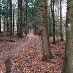 Szlak zielony z Rymanów Zdrój. Na drzewie widoczne oznaczenie szlaku.
