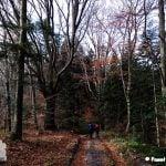 Ścieżka ze szczytu Mogiła przez las. Na zdjęciu widoczne buki i jodły.