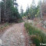 Kamienna droga wiodąca przez las