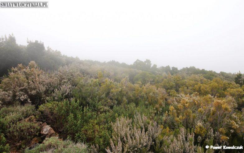 Wyspy Kanaryjskie - unikatowa roślinność. Endemity