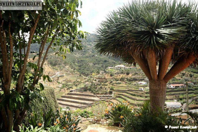 L-Gomera - egzotyczne drzewa i panorama wyspy - Wyspy Kanaryjskie