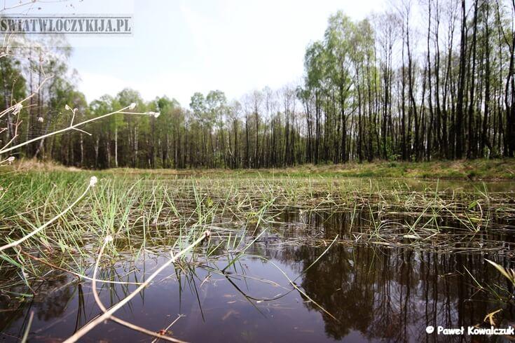 Naturalne oczko wodne w Poleskim Parku Narodowym. Oczko zlokalizowane przy ścieżce Czahary