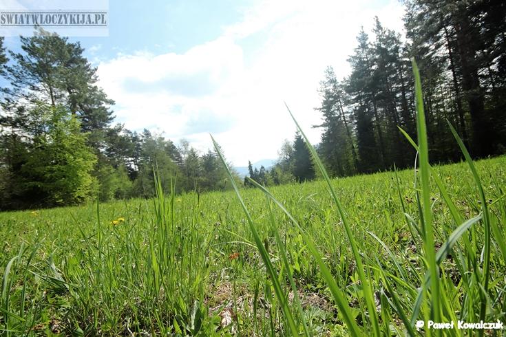 Polana z perspektywy trawy. Beskidy.