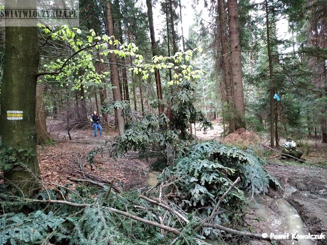 Zamaskowany gałęziami szlak. Przeszkoda w lesie. Beskidy.
