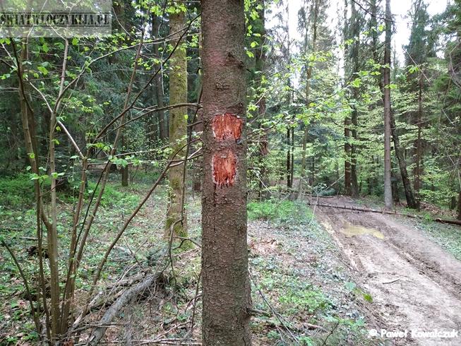 Zdarte oznaczenie szlaku na drzewie. W tle ścieżka i las. Beskidy.