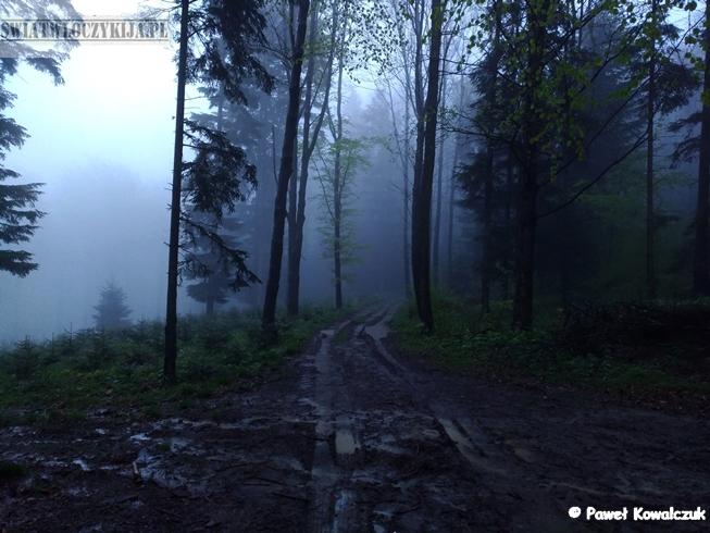 Beskidy. Gęsta mgła okalająca las. Na pierwszym planie błotnista ścieżka.