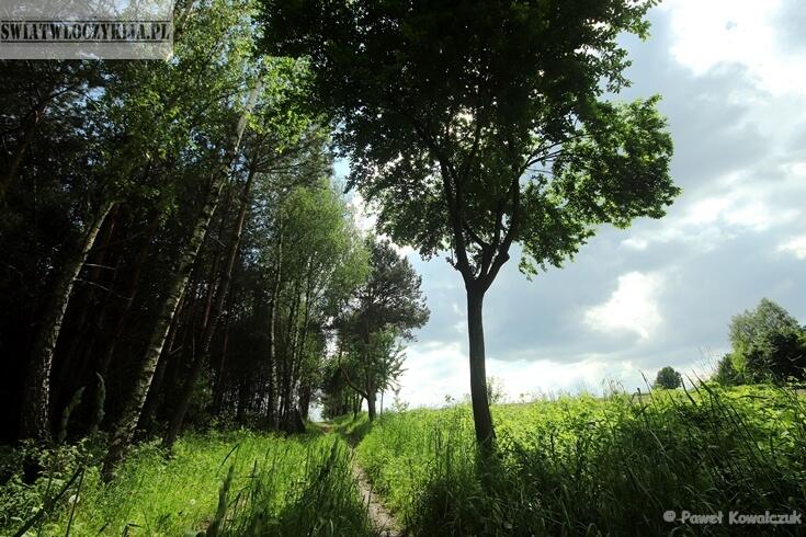 Roztocze - skraj lasu. Po lewej stronie las. Po prawej pknnik męski