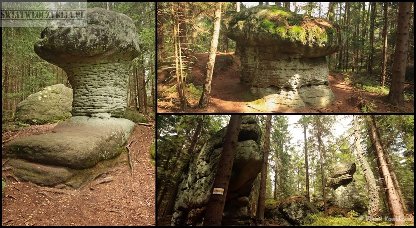 Skalne grzyby w górach stołowych. Przedziwne formacje skalne przypominające grzyby