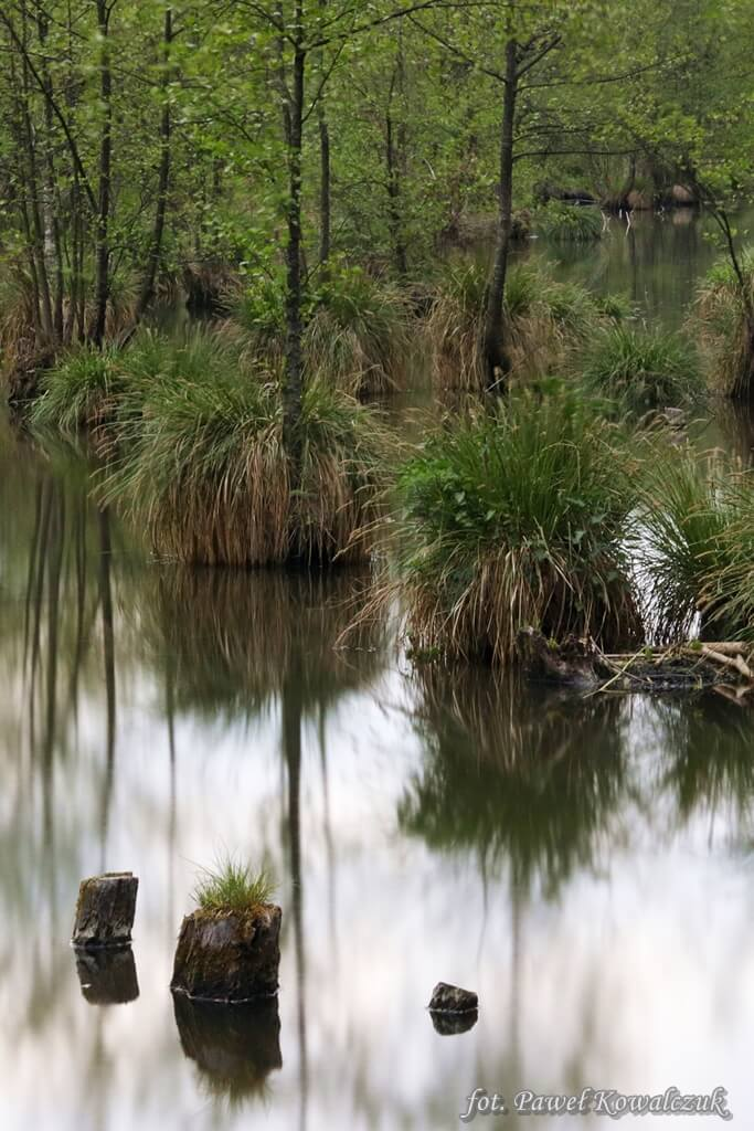 Rozlewisko z gładka taflą wody odbijającą roślinność