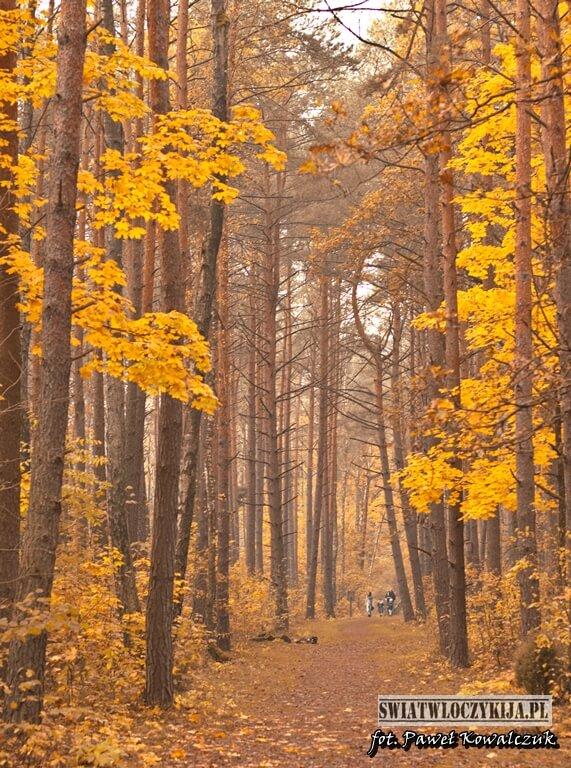 ścieżka Bobrówka w kolorach jesieni