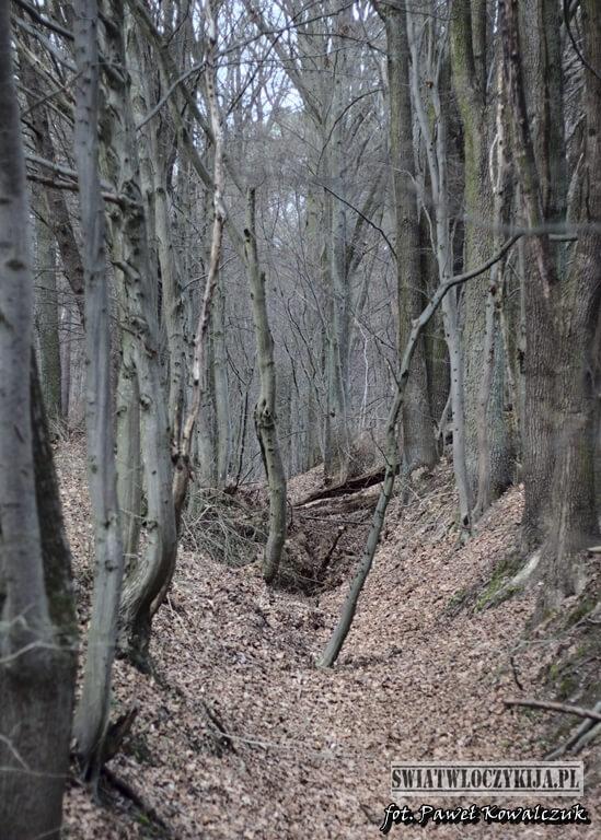 Wąwóz przecinający lasy Kozłowieckie