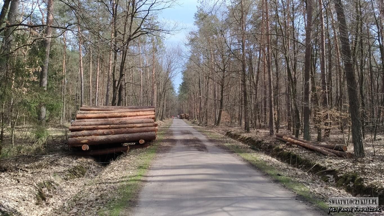 Droga leśna w kierunku Starego Tartaku